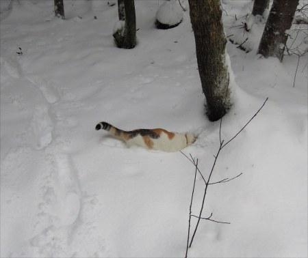 Linda forest snow DSCN3481