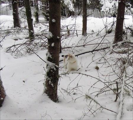 Linda snow DSCN3477