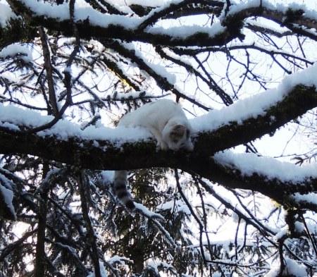 Linda tree snow DSCN1197 b