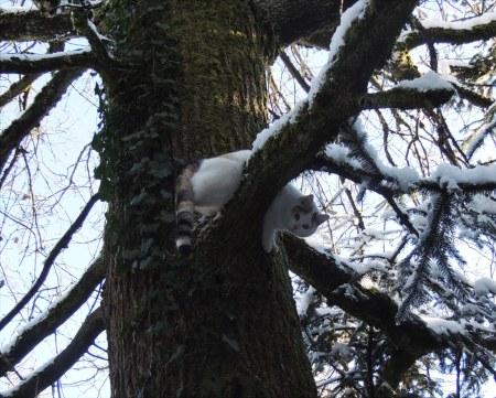 Linda tree snow DSCN1214