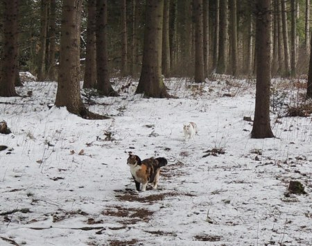 Rosy Linda forest snow DSCN1247 b