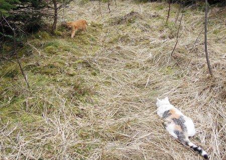 Linda Gandhi forest DSCN3613 b