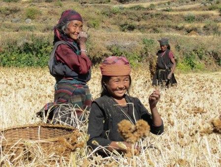 women harvesting 21