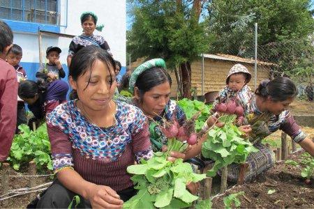 women harvesting 3