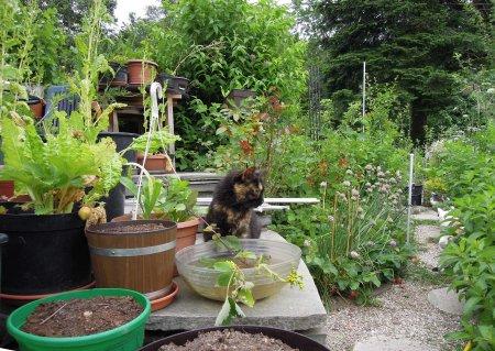 Mia garden DSCN3711
