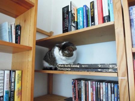 Min Ki bookshelf DSCN2850