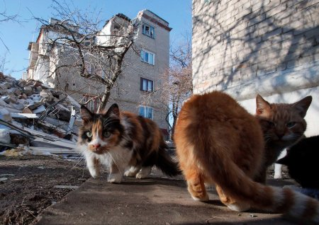 Donbass cats