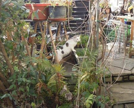 Lucia garden DSCN3909