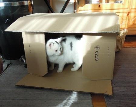 Lucia cardbord box DSCN3919