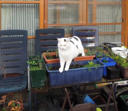 Lucia garden patio DSCN4048