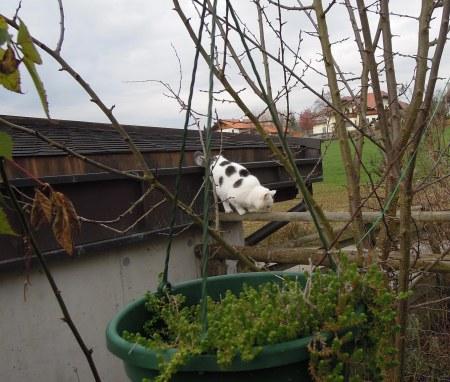 Lucia roof DSCN3980