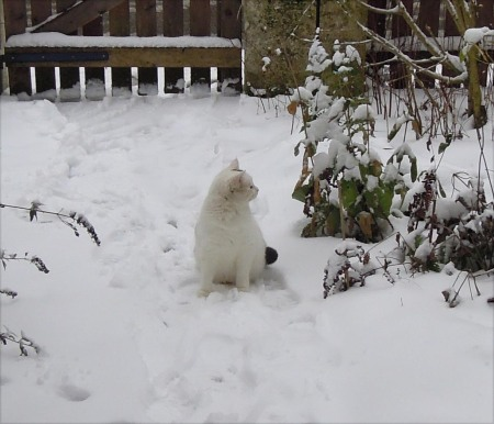Lucia snow DSCN4096