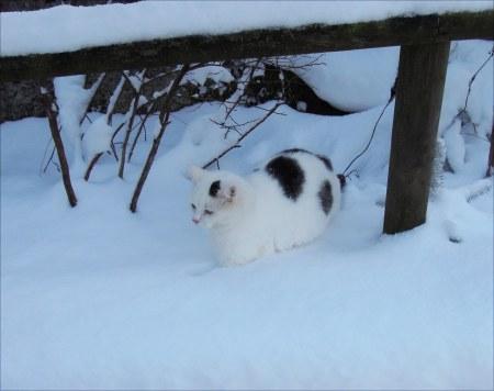 Lucia snow garden DSCN4212