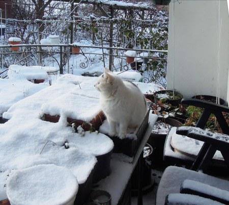 Lucia snow patio DSCN4245