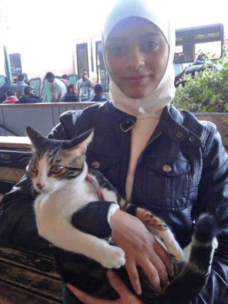 refugee cat 6
