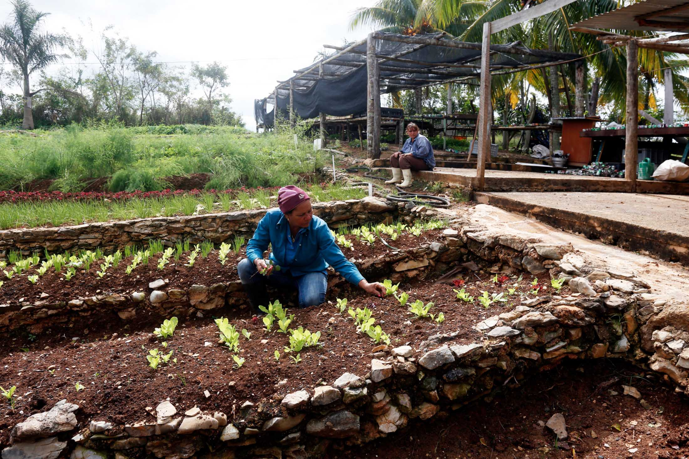 sustainable agriculture Global demand for food is estimated to double by 2050, increasing pressure on land and water a greener and more efficient food chain can contribute to sustainable.
