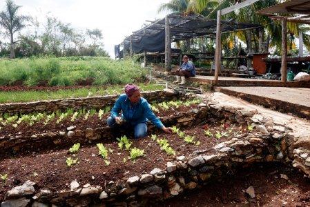 organic farming Cuba 12