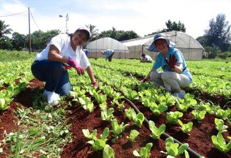 organic farming Cuba 16