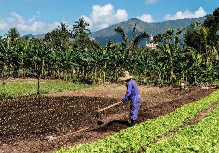 organic farming Cuba 17
