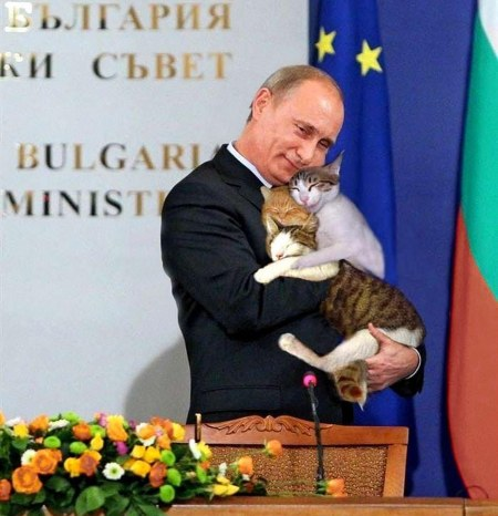 Putin cats b