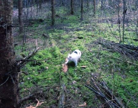 Lucia forest DSCN4449