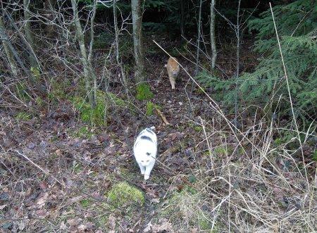 Lucia Gandhi forest DSCN4457 b