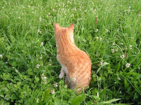 cats 17 07 20054