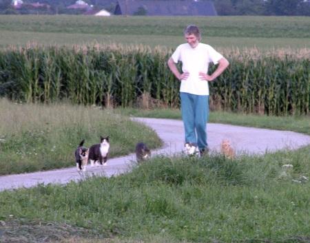 herding_cats_is_not_easy