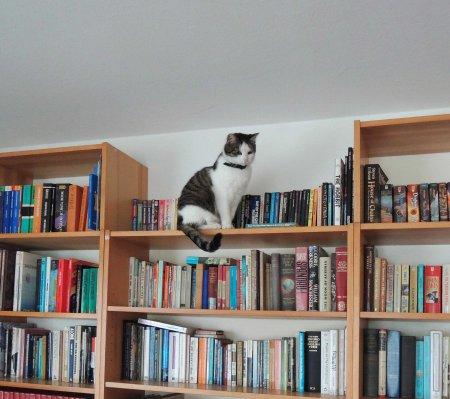 Min Ki bookshelf DSCN0844