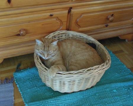 Gandhi basket DSCN4603