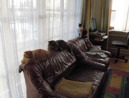 gandhi-wendy-rosy-couch-dscn3572