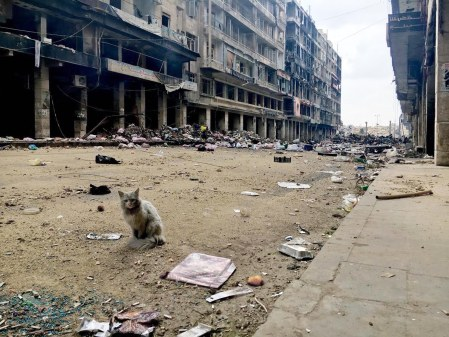 cat-aleppo-destruction