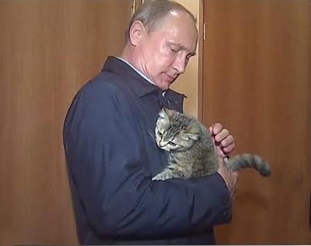putin-cat-6