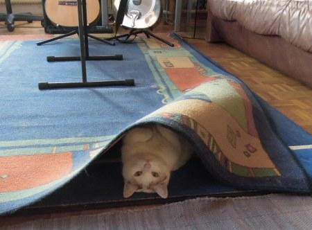 linda-carpet-dscn4751