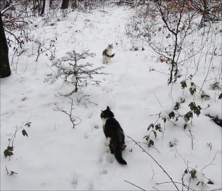 linda-min-ki-snow-dscn3461