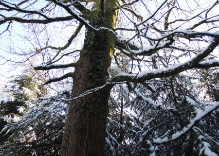 linda-tree-snow-dscn1207