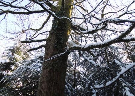 linda-tree-snow-dscn1207