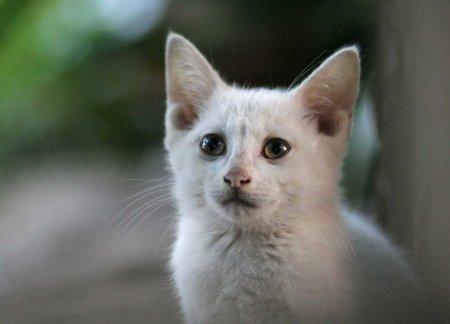 shelter-kitten