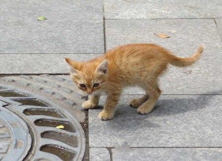 stray-kitten